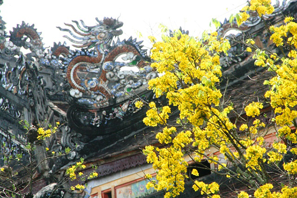 Một góc xuân hoàng cung Huế