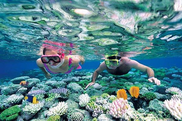 Lặn ngắm san hô tại Hòn Mun