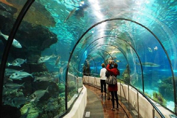 kham-pha-dai-duong-tai-vinpearl-aquarium-times-city